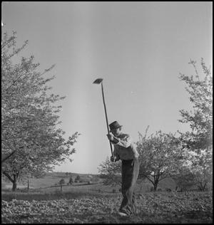 Primary view of object titled '[Wade Clark hoeing in the garden]'.