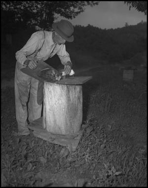 Primary view of object titled '[Robbing a Bee Hive]'.