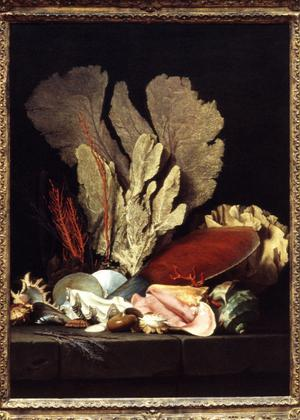 Primary view of object titled 'Marine Still Life with Corral and Seashells'.
