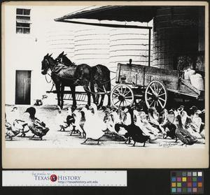 Primary view of object titled '[Ducks and horse-drawn cart (1)]'.