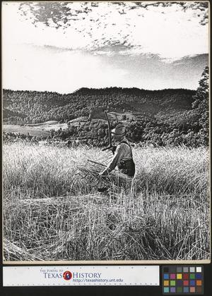 Primary view of object titled '[Wade Hampton Clark, Jr. cradling wheat]'.