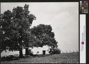 Primary view of object titled '[The Drive-In Outhouse]'.