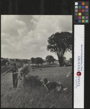 Primary view of object titled '[Boy Working on Canadian Farm]'.