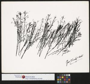 Primary view of object titled '[Winter Weeds]'.