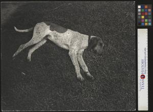 Primary view of object titled '[Sleeping Hound]'.