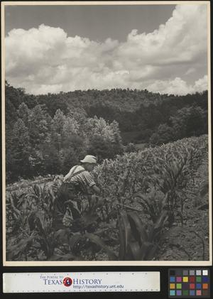 Primary view of object titled '[Boy Working on Farm]'.
