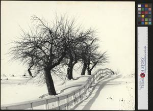 Primary view of object titled '[Trees in the Snow]'.