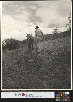 Primary view of object titled '[Man Plowing Field]'.