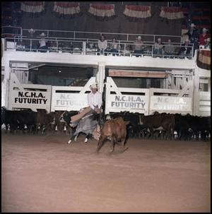 Primary view of object titled '[Royal Blue Boon at 1983 NCHA Futurity(4)]'.