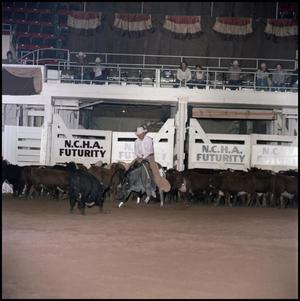 Primary view of object titled '[Royal Blue Boon at 1983 NCHA Futurity]'.