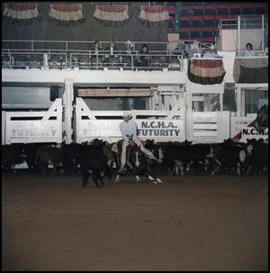 Primary view of object titled '[Jae Bar Fletch at 1983 NCHA Futurity(1)]'.