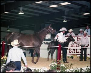 Primary view of object titled '[Jerry Wells horse sale]'.