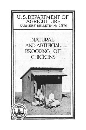 Primary view of Natural and artificial brooding of chickens.