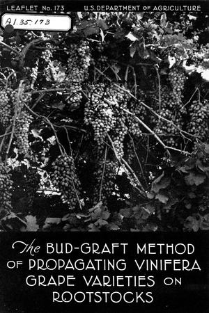 Primary view of object titled 'The bud-graft method of propagating vinifera grape varieties on rootstocks.'.