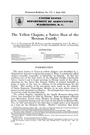 Primary view of object titled 'The yellow chapote, a native host of the Mexican fruitfly.'.