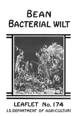 Primary view of object titled 'Bean bacterial wilt.'.