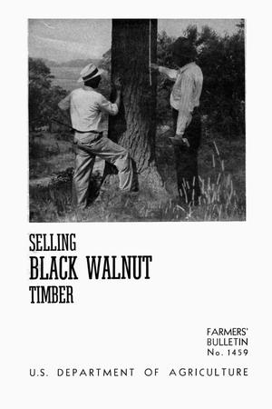 Primary view of object titled 'Selling black walnut timber.'.