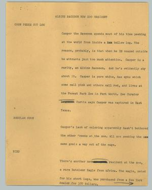 Primary view of object titled '[News Script: Albine raccoon new zoo resident]'.
