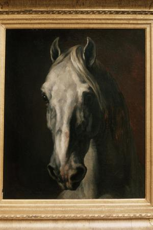 Primary view of object titled 'Head of a White Horse'.