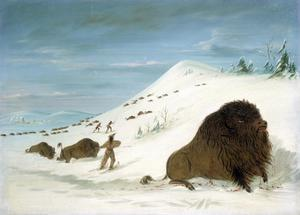 Primary view of Buffalo Lancing in the Snow Drifts -- Sioux