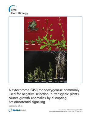 A cytochrome P450 monooxygenase commonly used for negative selection in transgenic plants causes growth anomalies by disrupting brassinosteroid signaling