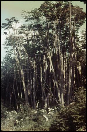 Primary view of object titled 'Trees, daisies'.
