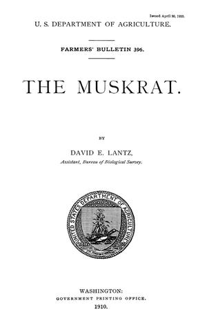Primary view of object titled 'The Muskrat'.