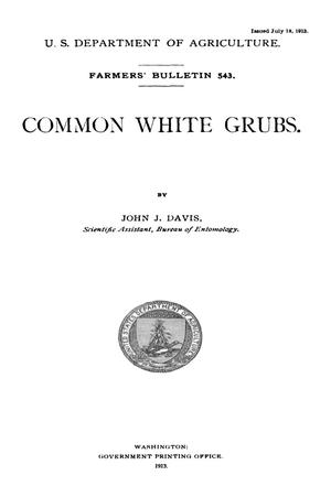 Primary view of object titled 'Common White Grubs'.