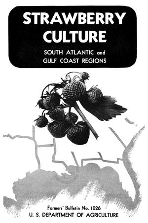 Primary view of object titled 'Strawberry Culture: South Atlantic and Gulf Coast Regions'.