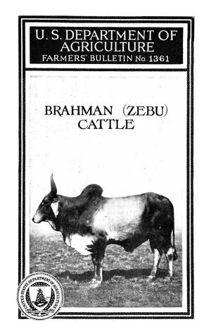 Primary view of object titled 'Brahman (Zebu) Cattle'.