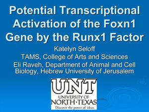 Primary view of object titled 'Potential Transcriptional Activation of the Foxn1 Gene by the Runx1 Factor'.