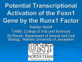 Potential Transcriptional Activation of the Foxn1 Gene by the Runx1 Factor
