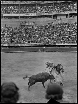 Primary view of object titled '[A matador kills a bull in Juarez, Mexico]'.