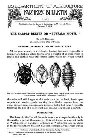 "Primary view of object titled 'The Carpet Beetle or ""Buffalo Moth""'."