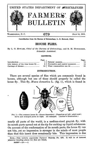 Primary view of object titled 'House Flies'.