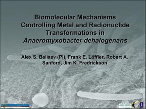 Primary view of object titled 'Biomolecular mechanisms controlling metal and radionuclide transformations in anaeromyxobacter dehalogenans'.
