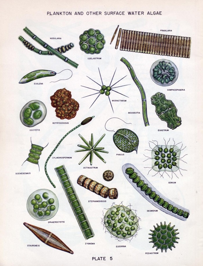 algae in water supplies an illustrated manual on the
