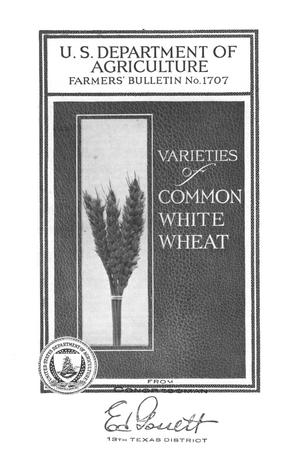 Primary view of object titled 'Varieties of common white wheat.'.