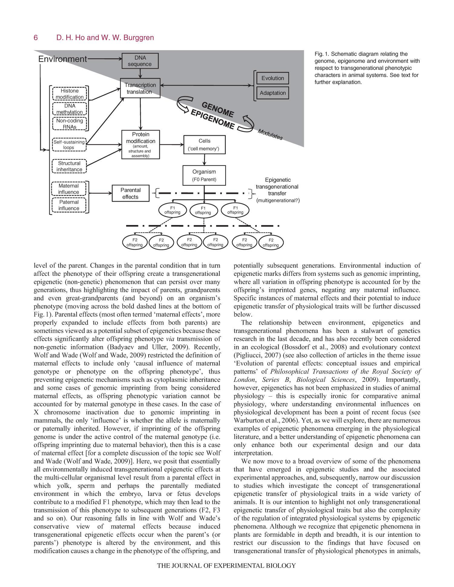 study on transgenerationa transmission on parenting