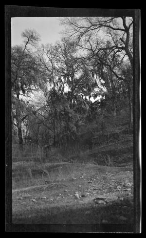 Primary view of object titled '[Photo of a wooded area]'.