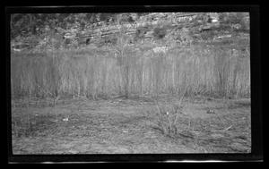 Primary view of object titled '[Photo of desert foliage]'.
