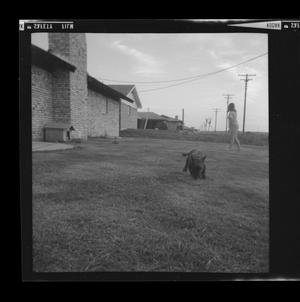 Primary view of object titled '[Pam Williams playing with a dog in a field]'.