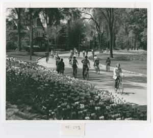 Primary view of object titled '[Tulips and Cyclists in Ottawa]'.