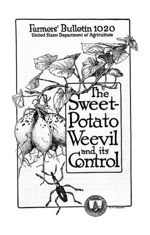 Primary view of object titled 'The Sweet-Potato Weevil and Its Control'.