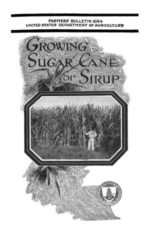 Primary view of object titled 'Growing Sugar Cane for Sirup'.