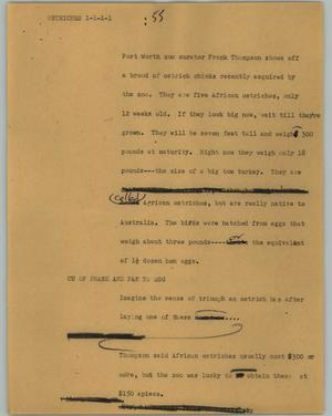 Primary view of object titled '[News Script: Ostriches]'.