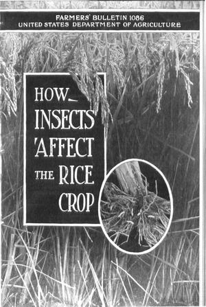 Primary view of object titled 'How Insects Affect the Rice Crop'.