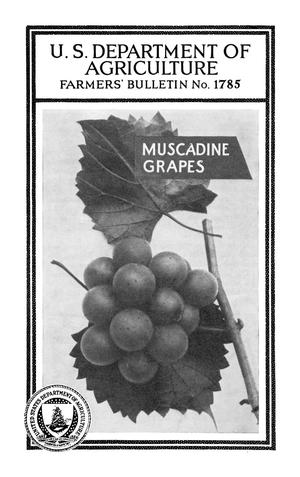 Primary view of object titled 'Muscadine Grapes'.