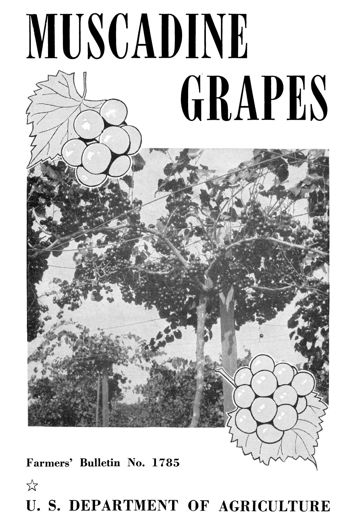 Muscadine Grapes                                                                                                      Front Cover