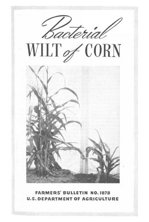 Primary view of object titled 'Bacterial Wilt of Corn'.